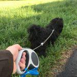 """Anleinpflicht. Selbst wenn der Hund angeblich nur spielt und immer """"bei Fuß"""" geht, gilt in Eschenburg vom 15. März bis 15. Juni eine Anleinpflicht."""