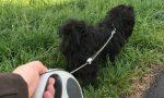 """Hunde anleinen, um die """"Kinderstube"""" der Natur zu schützen"""
